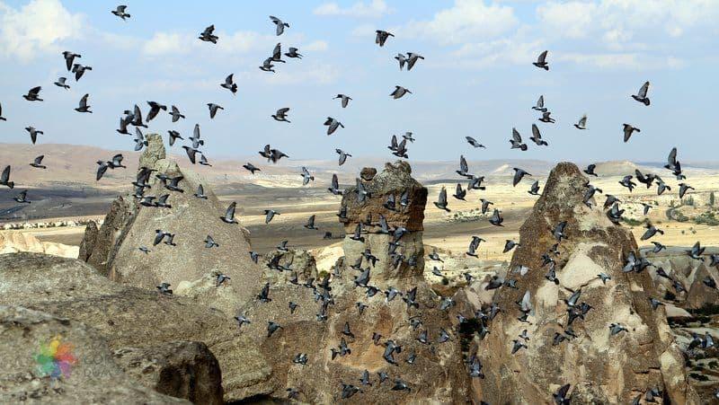 kapadokya gezilecek yerler Güvercinlik Vadisi