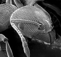 Mikroskopta Boyut Neden Önemlidir?